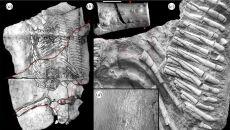 Holotyp proneustikozaura