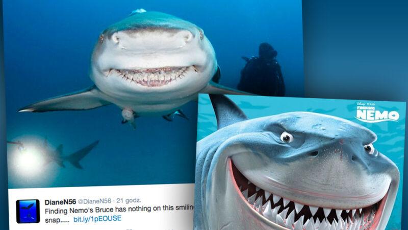 """Ten rekin wygląda jak Bruce z filmu """"Gdzie jest Nemo?"""""""