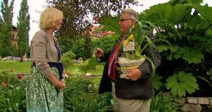 """Nowa odmiana liliowca. Ten piękny kwiat nazwano """"Maja w ogrodzie"""""""