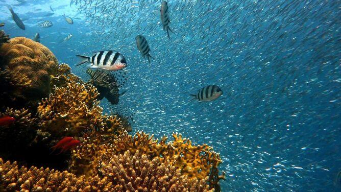 Naukowcy ostrzegają: do 2100 roku rafy koralowe mogą zniknąć z Ziemi